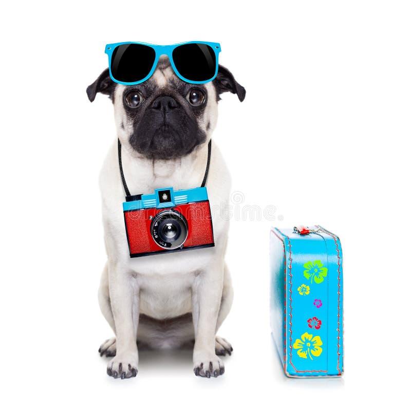 Photographe de chien photo stock