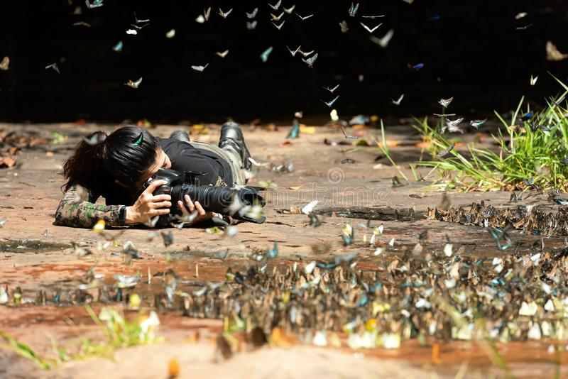Photographe de femme professionnelle prenant le papillon dans la nature verte de forêt tropicale de jungle photographie stock libre de droits
