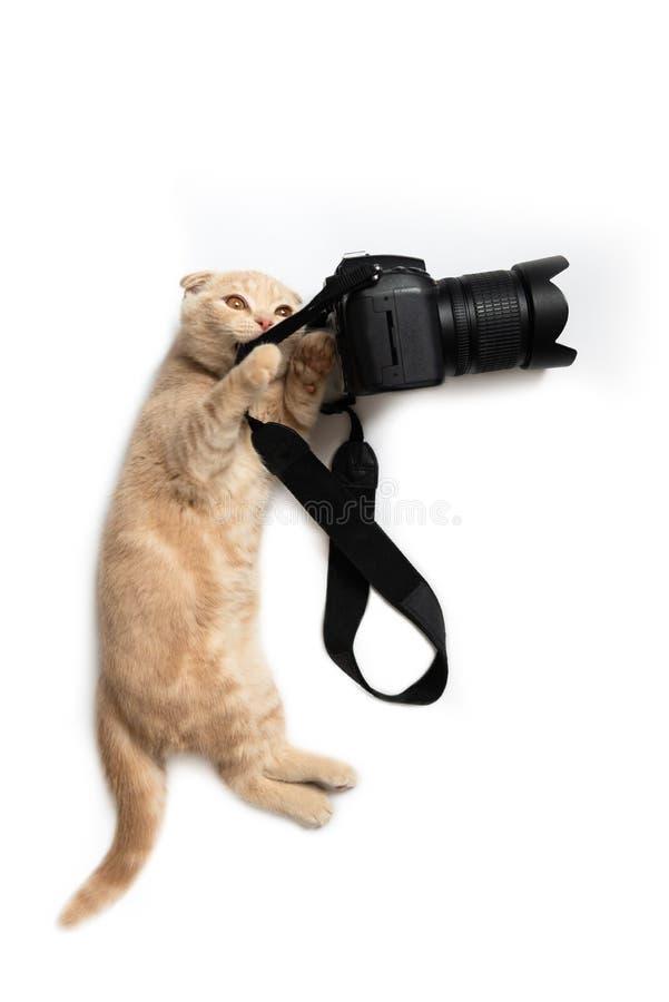 Photographe fou Chat drôle avec la caméra d'isolement sur le fond blanc Concept créatif pour le jour de photographie du monde, ba photos stock