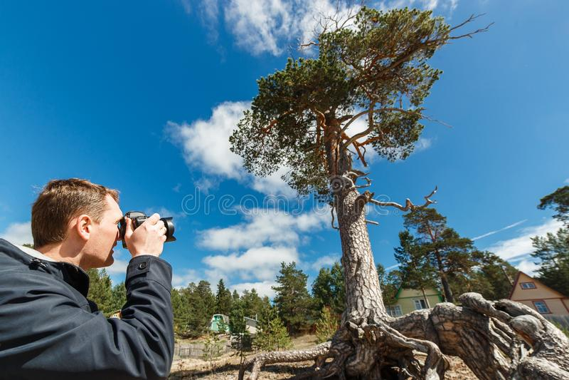 Photographe masculin de paysage photographiant un beau pin informe photos stock
