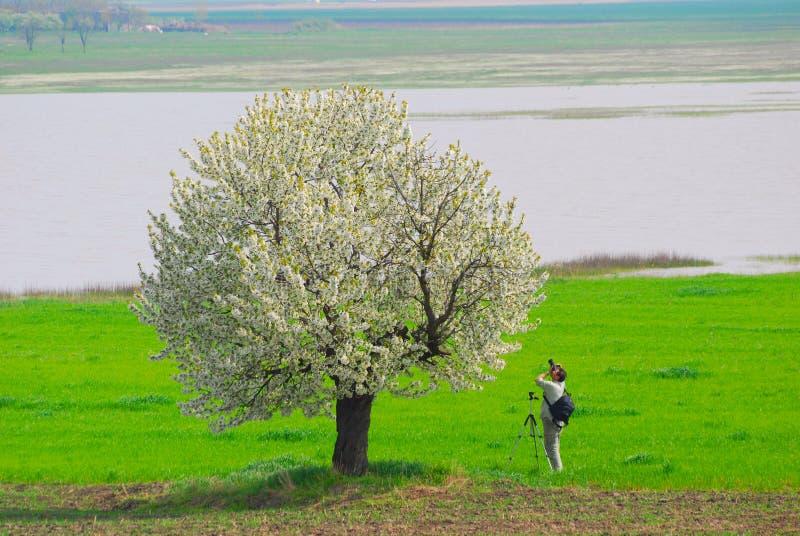 Photographe photographiant l'arbre de source image stock