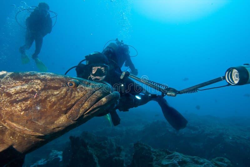 Download Photographer and big fish stock image. Image of animal - 19658649