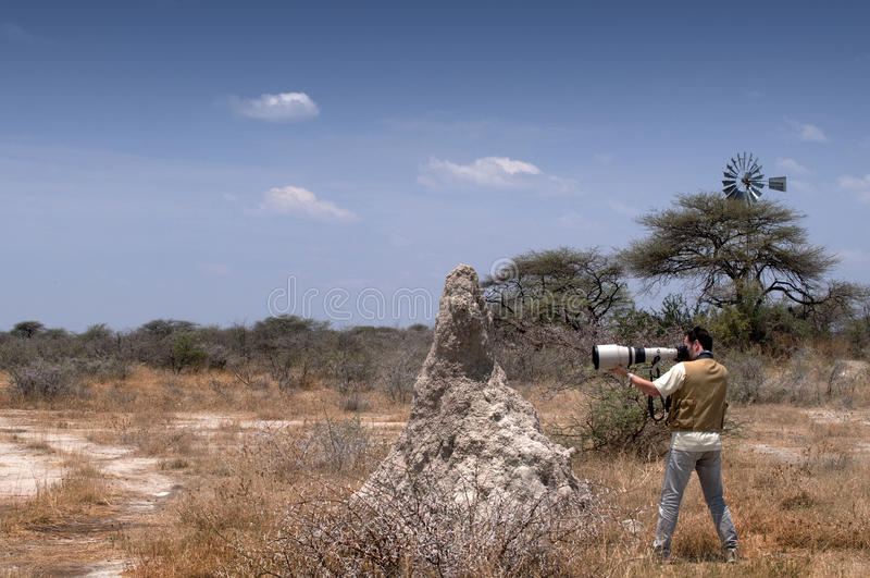Photographer in the savannah. A photographer is taking pictures with a telephoto lens in the savannah next to an anthill stock images
