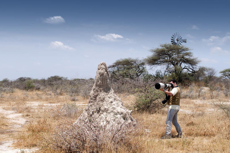 Photographer in the savannah #2. A photographer is taking pictures with a telephoto lens in the savannah next to an anthill royalty free stock photography
