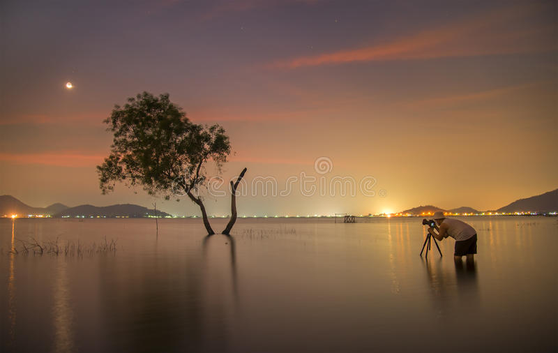 Photographer tak a photo alone alive tree royalty free stock photography