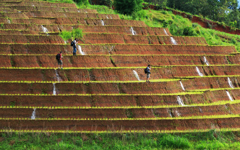 Photographer taking photo of rice fields on terraced at Chiang M stock photos