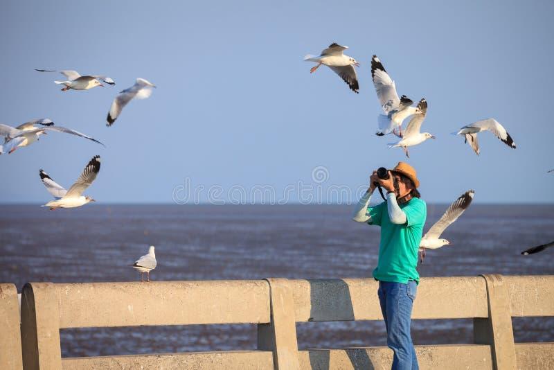 Photographer taking seagulls photo