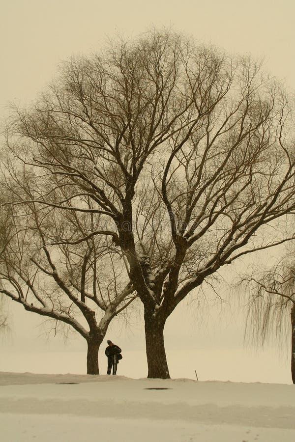 photographer tree under στοκ εικόνες με δικαίωμα ελεύθερης χρήσης