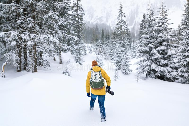 The photographer is walking in winter forest royalty free stock images