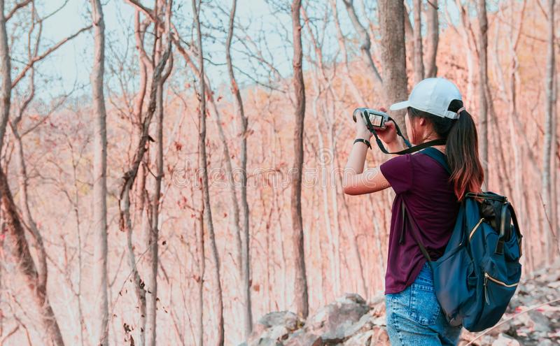 Photographer women using Camera DSLR, Mirror less Digital Single Lens Reflex take a photo Mountain tree . Travel Concept. Hiker royalty free stock photo