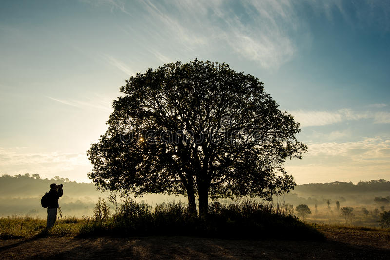 Photographers and big trees. stock photography