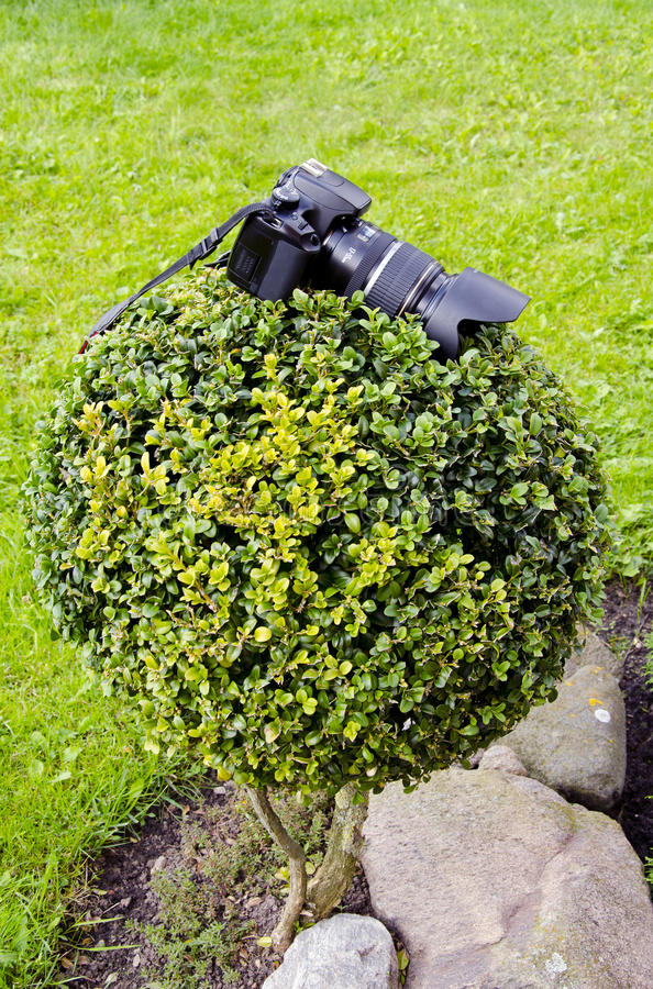 Download Photographers Camera On The Plant Stock Photo - Image: 22561612