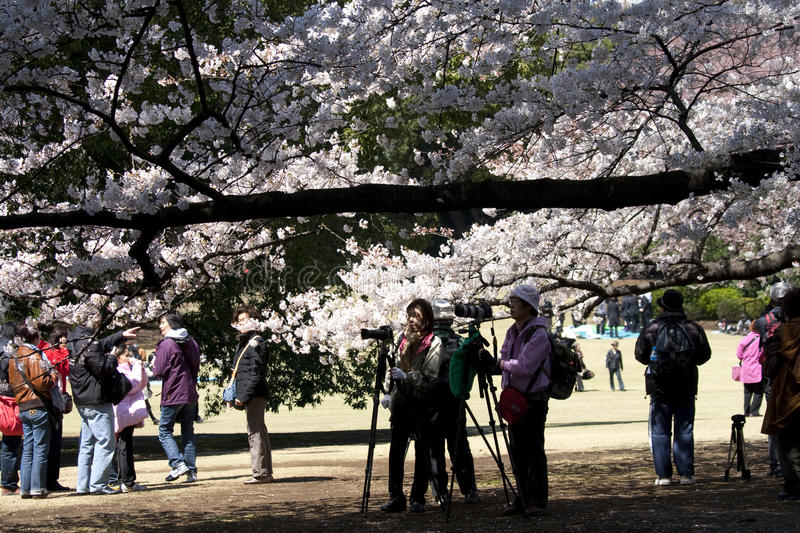 Photographers during Hanami in Tokyo stock photography
