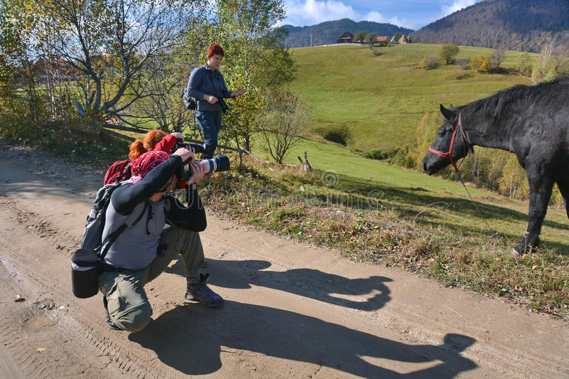 Photographers shooting a horse royalty free stock image