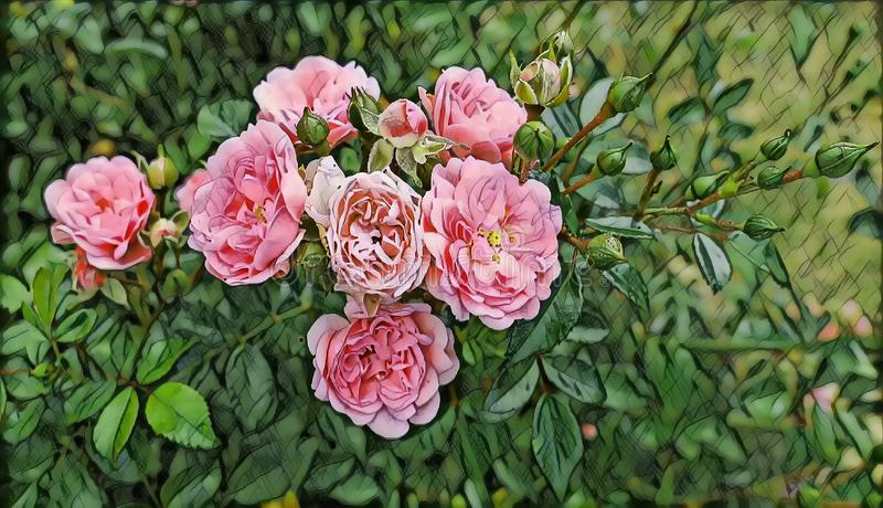 Photographic art picture of juicy summer garden roses close up. Photographic art picture of juicy summer garden roses royalty free illustration