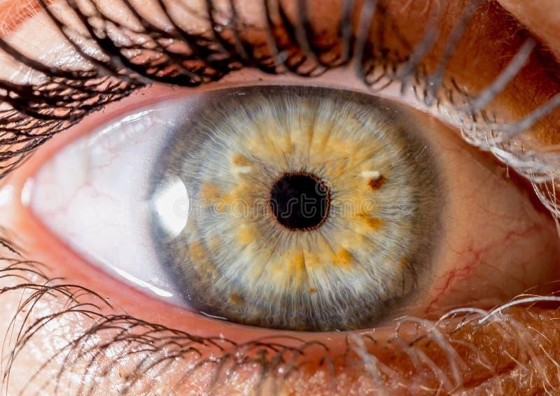 Photographie d'iris Macro tir étroit d'un globe oculaire jaune et rouge verts photos stock