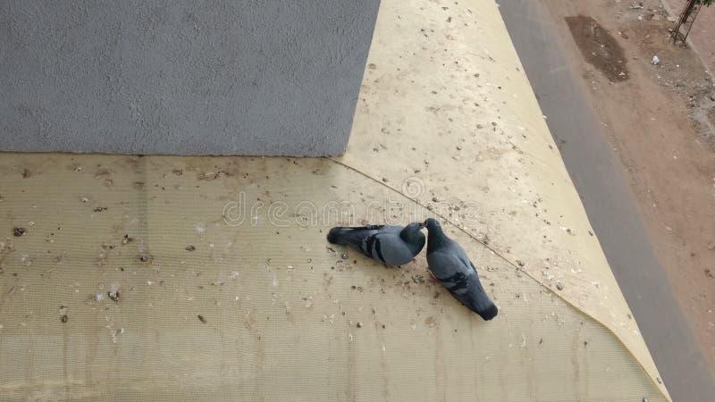 Photographie d'oiseaux d'amour inspirer de l'amour photos libres de droits