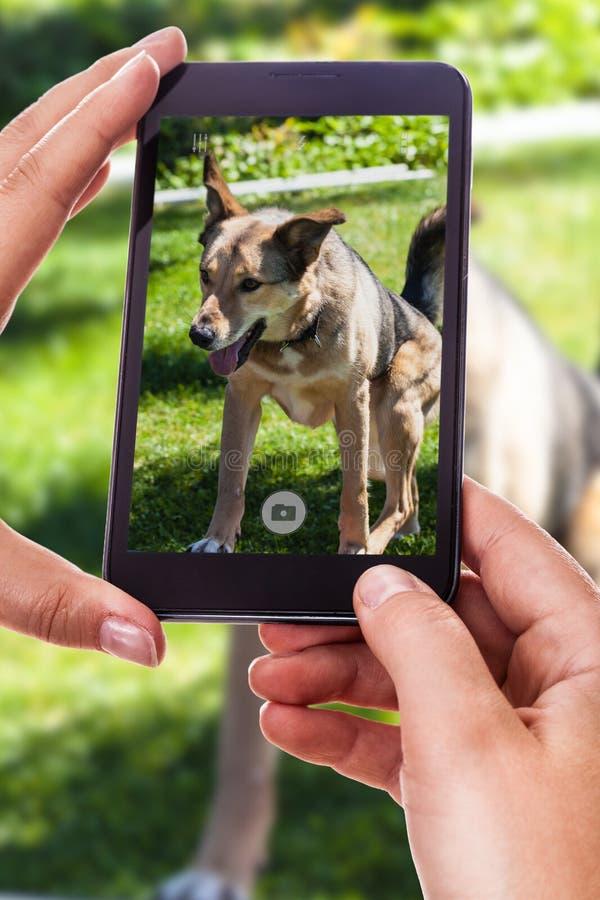 Photographie d'un chien image stock