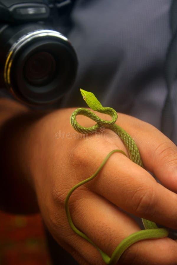 Photographie de faune de serpent images libres de droits