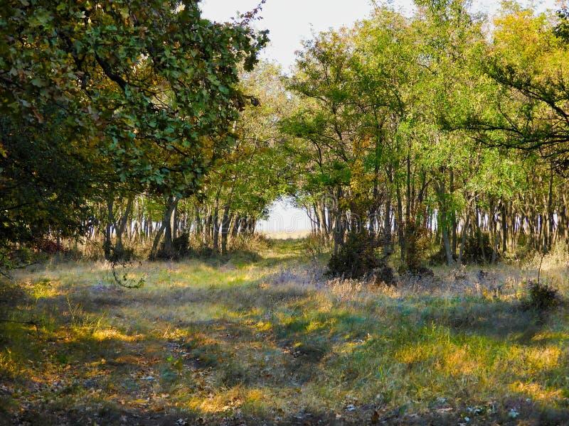 Photographie de la forêt dans le temps d'automne avec des feuilles au sol photo stock