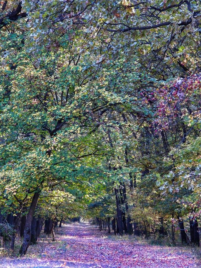 Photographie de la forêt dans le temps d'automne avec des feuilles au sol photo libre de droits