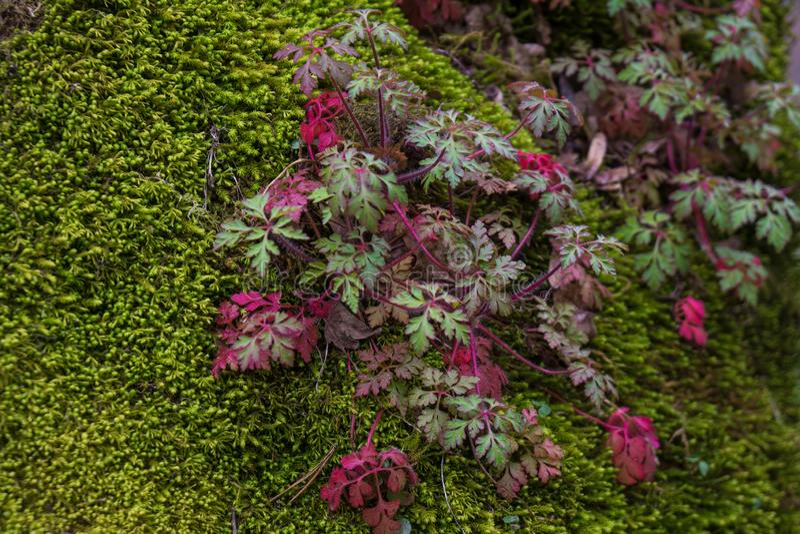 Photographie de parc national de Bordschomi macro photo libre de droits