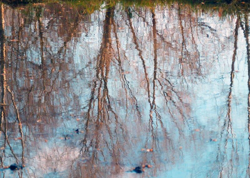 Photographie en couleur de réflexion d'arbres sur l'eau image stock