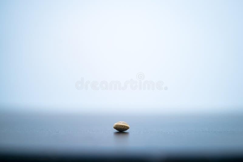 Photographie haute étroite de macro d'une graine de cannabis sur le fond neutre foncé photo stock