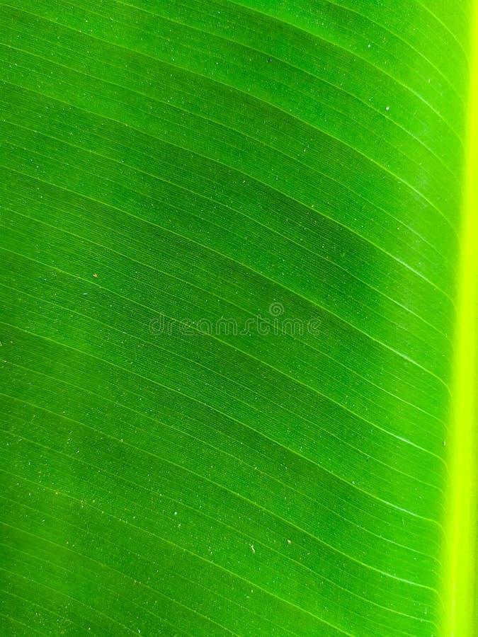 Photographie mobile de feuille verte, espérant obtenir des images étonnantes avec un dispositif simple photo stock