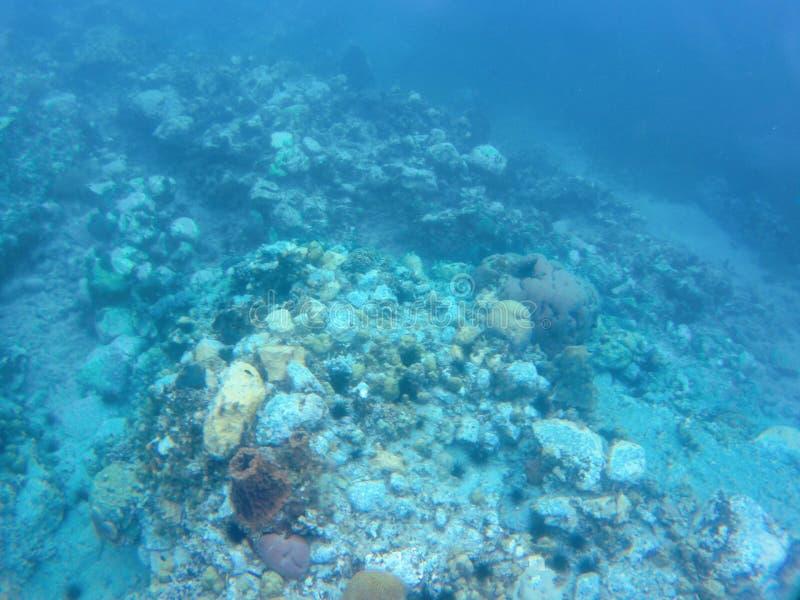 Photographie sous-marine rentrée les Caraïbe photographie stock