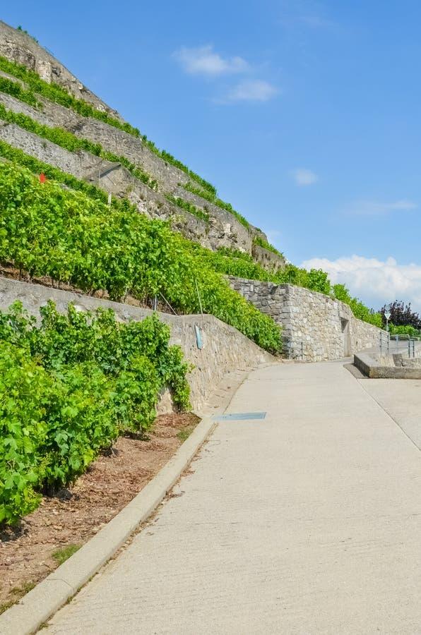 Photographie verticale de chemin scénique le long des vignobles en terrasse Vignoble sur des collines le long de lac geneva, Suis images stock