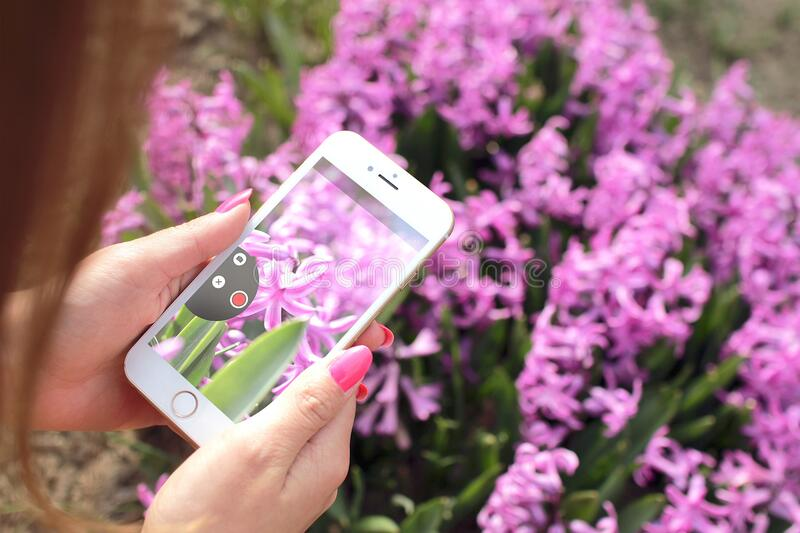 Photographing Flowers With Smartphone Free Public Domain Cc0 Image