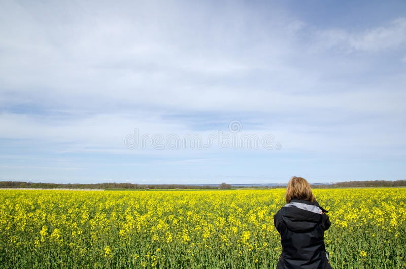Download Photographing Field Royalty Free Stock Photo - Image: 24743955
