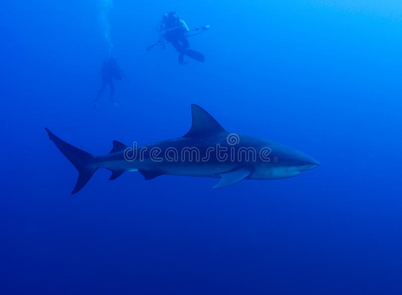 Download Photographing Sharks Royalty Free Stock Images - Image: 21942279