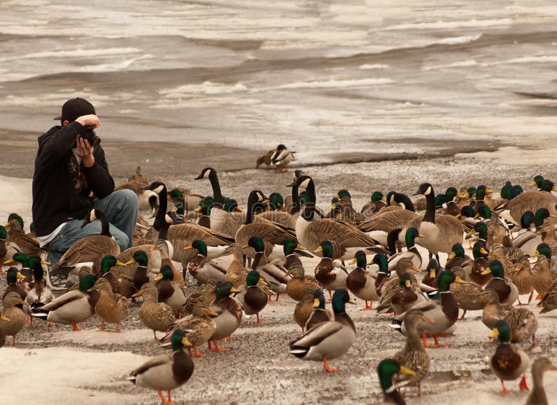 Download Photographing waterfowl stock photo. Image of shoreline - 18711676