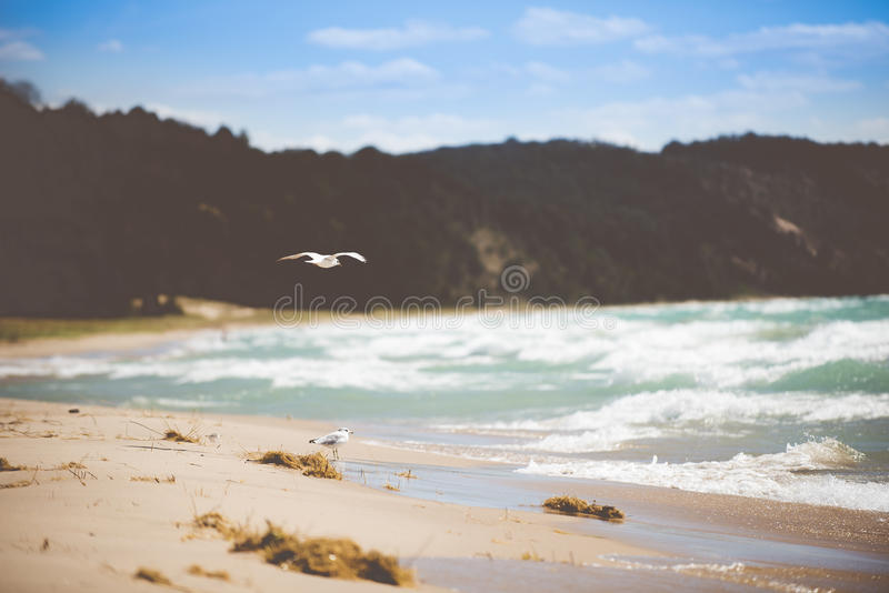 Photography Of Beach During Daytime Free Public Domain Cc0 Image