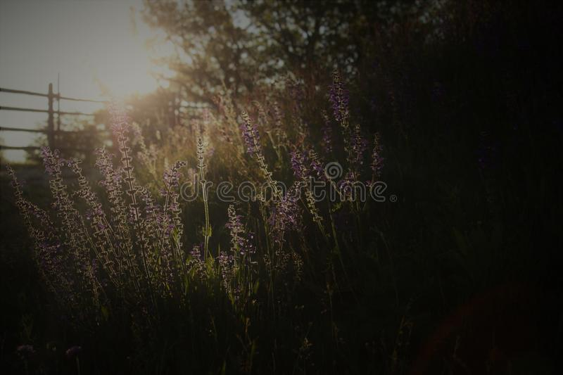 Photography of Bed of Flowers royalty free stock images