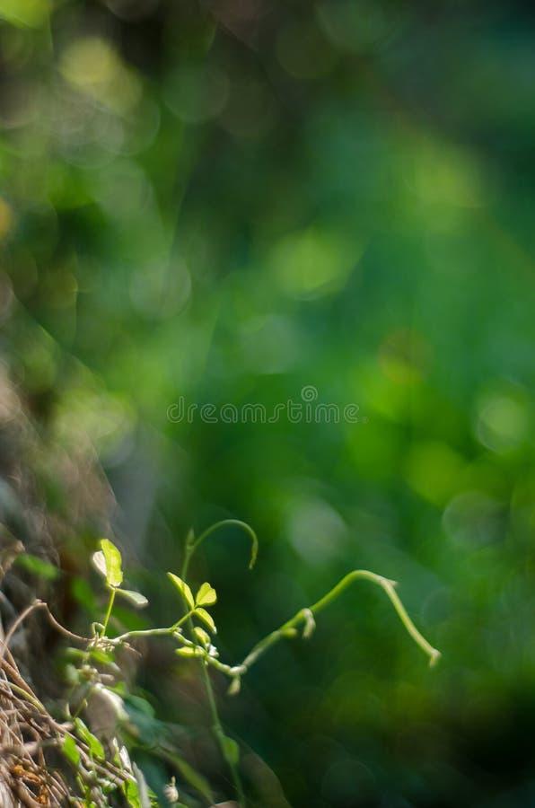 Nature green bokeh sunlight blur leaves background. stock image