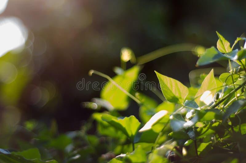 Nature green bokeh sunlight blur leaves background. stock images