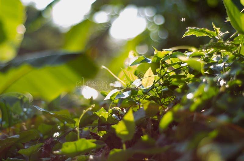 Nature green bokeh sunlight blur leaves background. stock photos