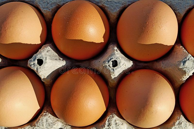 Photography of chicken eggs royalty free stock photo