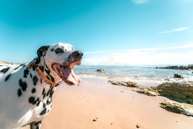 Photography of a Dog on Seashore royalty free stock photos