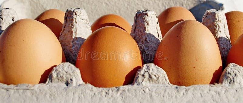 Domestic chicken eggs. Photography of domestic chicken eggs in carton stock photos