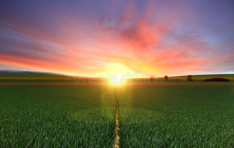 Photography of Footpath Between Green Grass Field during Golden Hour royalty free stock image