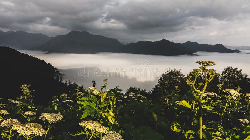 Photography of Green Leaf Plants With Mountain As Background royalty free stock image