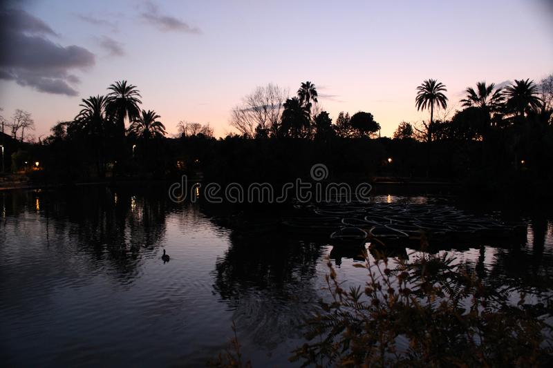 A lake with a duck at sunset. stock photography