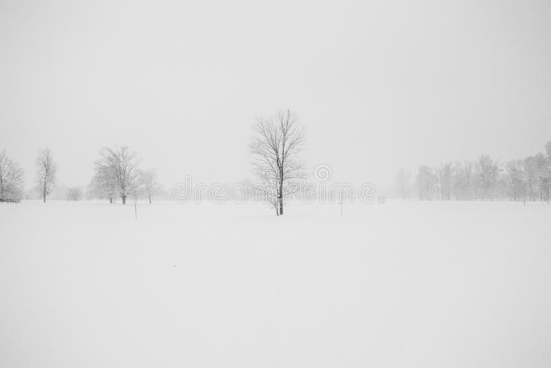Photography of Leafless Tree Surrounded by Snow royalty free stock photography