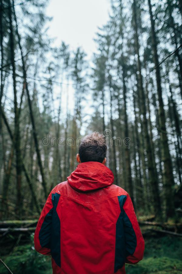 Photography of Man Wearing Black and Red Jacket Standing in Forest royalty free stock image