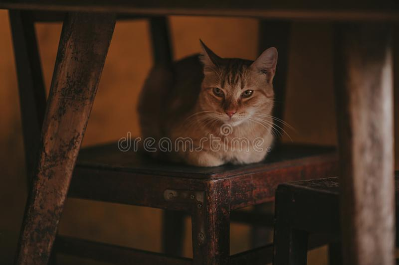 Photography of Orange Tabby Cat on Chair stock photo