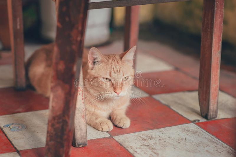 Photography of Orange Tabby Cat Lying on Floor royalty free stock photo